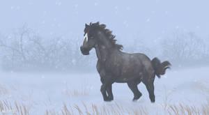DIRPG | Zander | Morning Snowfall by Majorest