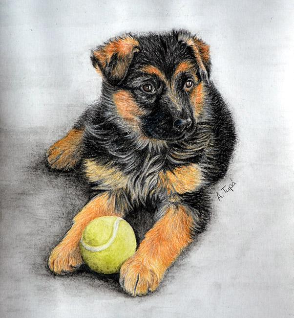 german shepherd puppy by ankaai3 on deviantart
