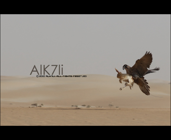 Alfrance by ALk7li