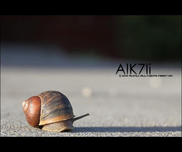 Snail by ALk7li