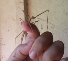 Very Friendly Stick Insect