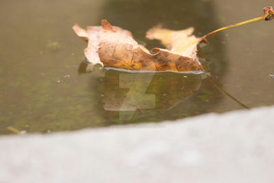 Waterscape Photo: Leaf Floating on water by vampirebites18