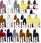 Horse Colors + Markings