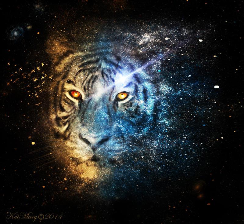 Tiger, tiger, burning bright by katmary