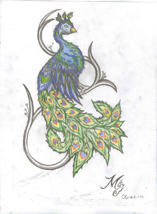 8f4241250 Peacock DrawingsColorful Peacock Tattoo Drawing