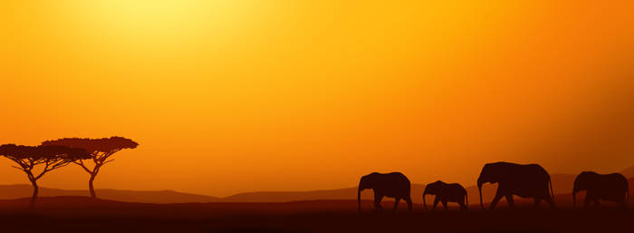 Elephants at Sunset