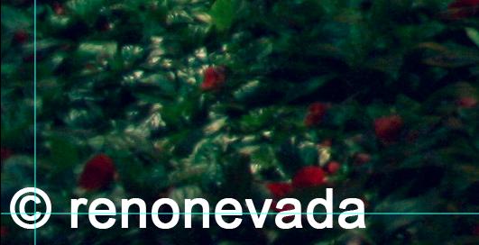 Screen Shot 2013-07-26 at 4.51.07 PM by renonevada