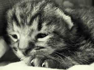 Kitten Love by BarbaraAguilar