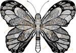 Butterfly 9 23 2015