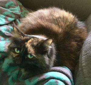 blackbirdandcat's Profile Picture