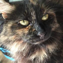 The Friendly Cat by blackbirdandcat