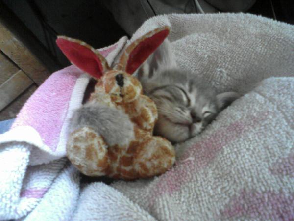 Liliko, my cute cat by Liliko-dream