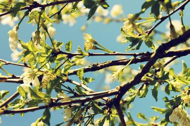 Spring II
