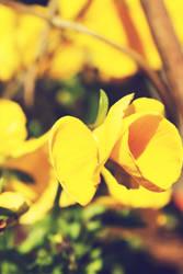 Spring VII