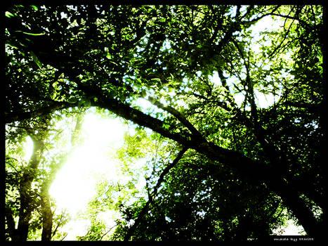 Glaring sunshine