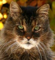 The Kat