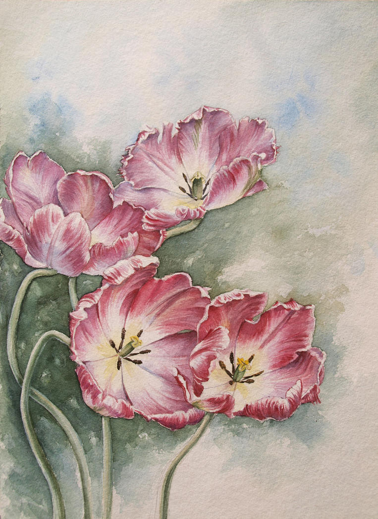 tulips by jennomat