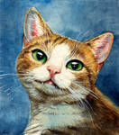my sweet kitty cat by jennomat
