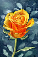 yellow rose by jennomat