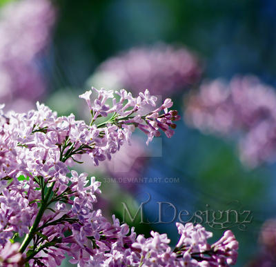The Porch is Filled With Sweet Lilac Smells by 33M