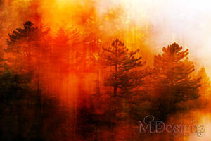 The Beautiful Pines In Autumn by 33M