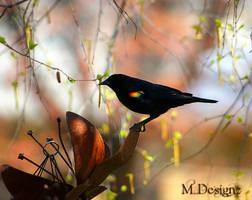 Its A RedWing Blackbird Spring by 33M