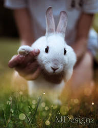 Baby Bunny Says Hello To You And Spring by 33M