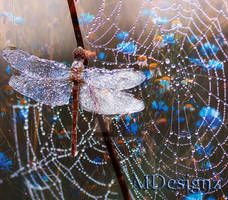 Little Souls With Gossamer Wings