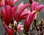 Lovely Spring Time Pinks
