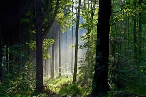 Forest by Vukar