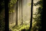 Morning Fog I by Vukar