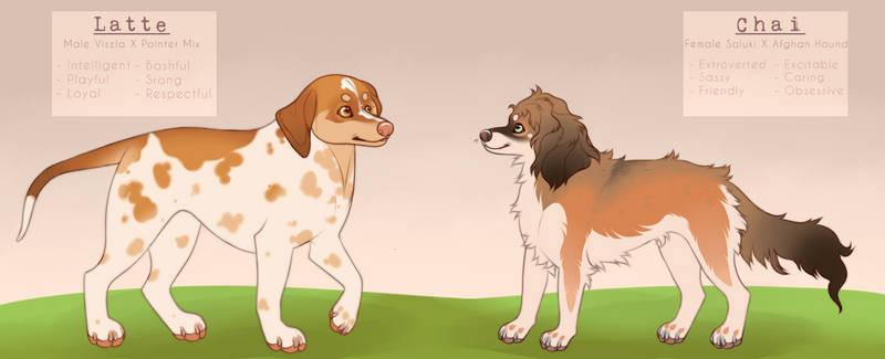 doggo adopts (sold)
