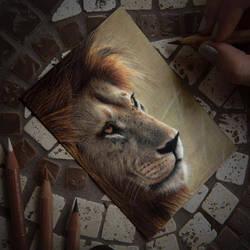 Drawing Lion by Heatherrooney