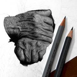 Drawing work in progress by Heatherrooney