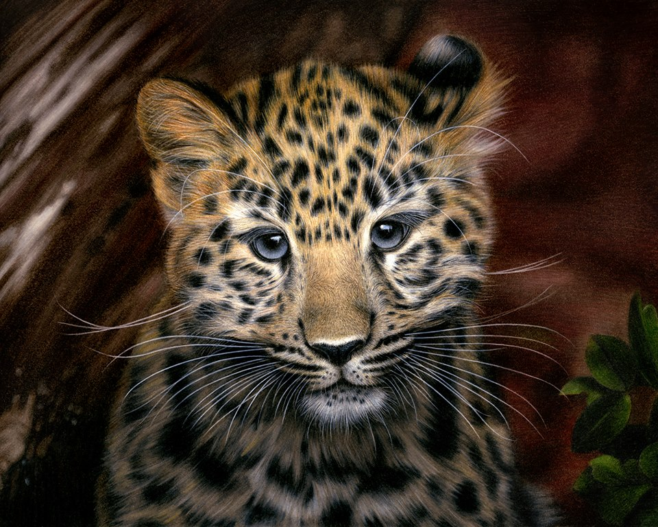 Drawing Amur Leopard by Heatherrooney