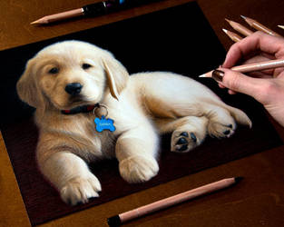 My puppy Sierra drawing by Heatherrooney
