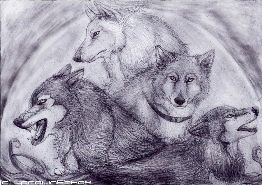 Wolfs Rain by Carolineshox
