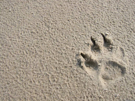 Paw in Sand
