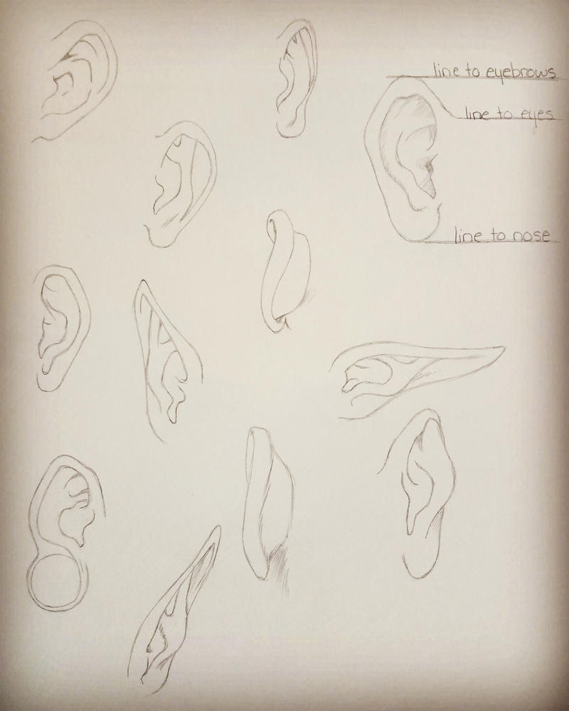 Ear Anatomy by KoalaTheArtist