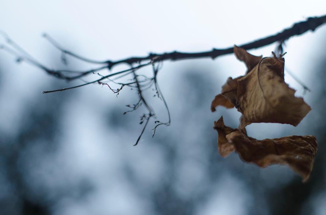 Winter Breath | by KipetuAkora