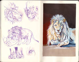 Lion studies on Moleskine by CirseSabino