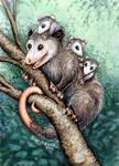 Opossum Totem Card