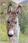 Donkey - 07