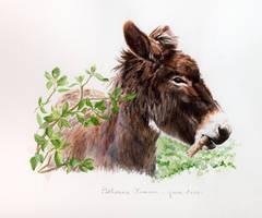 Donkey - 09