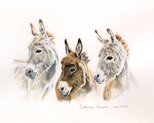 Donkeys - Trio