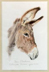 Donkey - 10