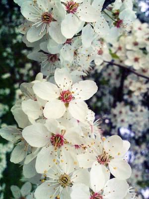 Spring love by AnchK