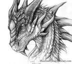 The Wise Dragon