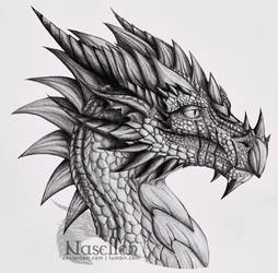 Portrait of Veteran Dragon by Naseilen