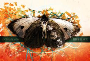 Butterfly effect by Kezako